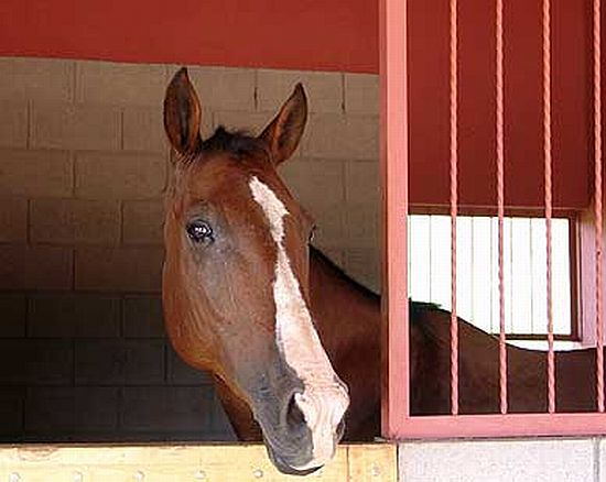 Potřeby pro koňské stáje, koňské boxy a konírny